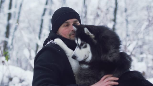 young man scratches and strokes a beautiful siberian husky best friend in the winter snowy background. dog and owner on a winter walk in the forest. - fedeltà video stock e b–roll