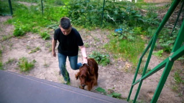 Young man trains his dog - irish setter climbs the stairs Young man trains his dog - irish setter climbs the stairs, slow motion irish setter stock videos & royalty-free footage
