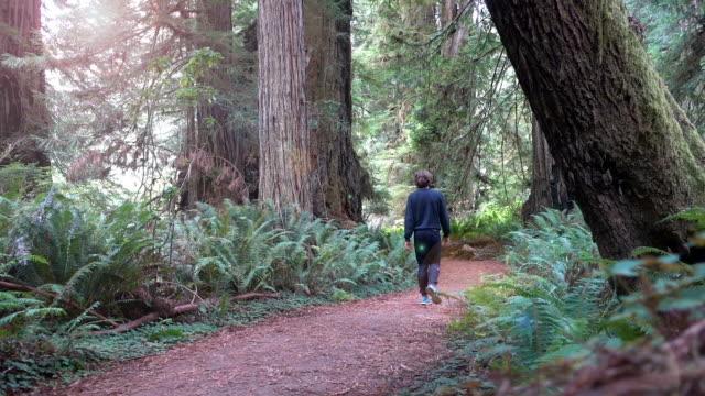 Young man walking true Prairie Creek Redwoods State Park between gigantic sequoia trees