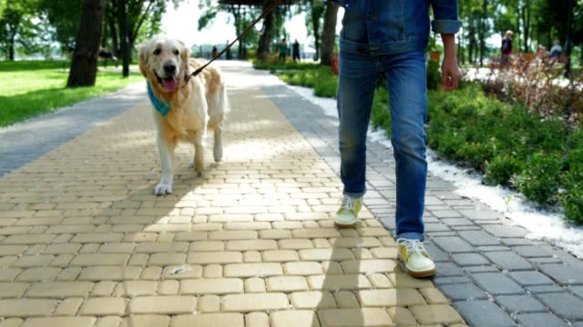 Young man walking with his purebred dog video