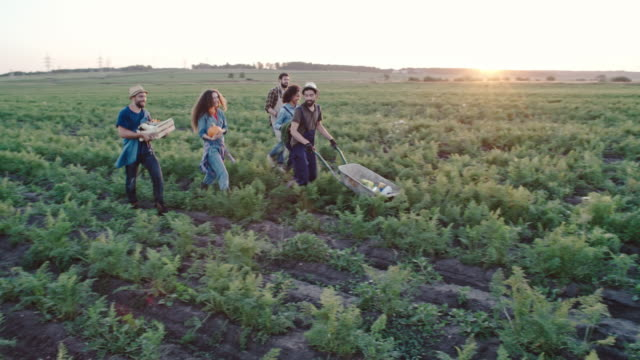 Young Men and Women with Fresh Harvest of Vegetables video