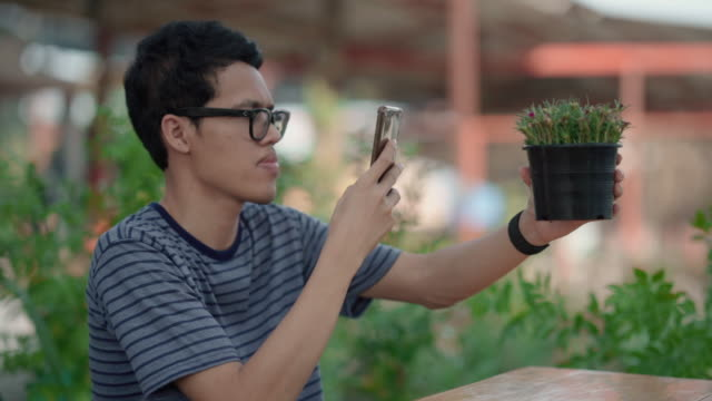 Young men take a photo while buying trees Young asian men take a photo while buying trees buy a tree for to plant in the garden at home. small business saturday stock videos & royalty-free footage