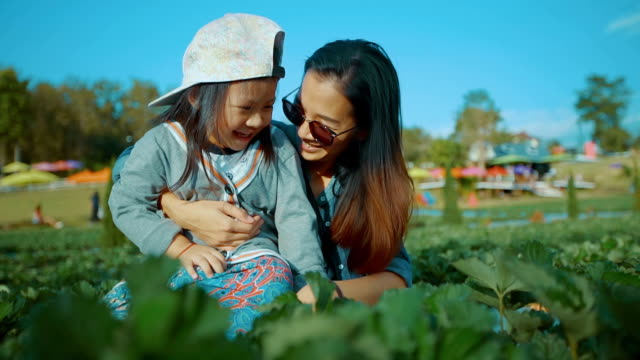 Young Mother And Daughter Picking Strawberries In A Farm video