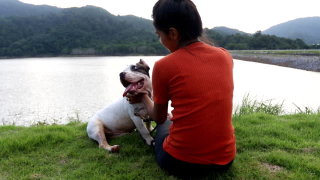 young owner and funny american bully dog in the relaxing time video