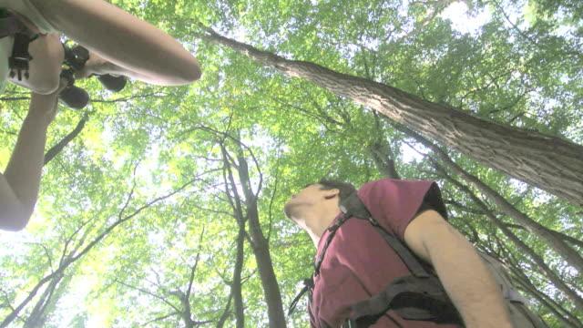 Junge Menschen beobachten Aktivitäten im Wald – Video