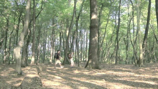 Young people hiking in woods during summer excursion on mountains video
