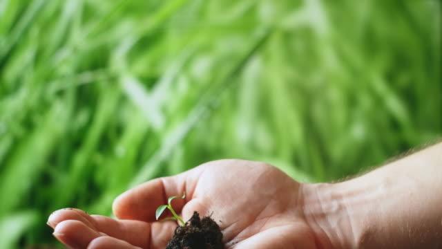 junge pflanzenbaum sprießen in der hand der frau. konzept der landwirtschaft und des umweltschutzes. grüner sämling in der hand. - woman and polygon stock-videos und b-roll-filmmaterial