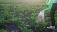 istock Young plant 1253584567