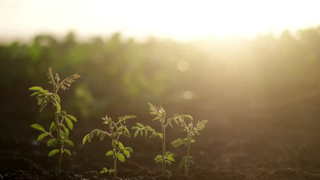 ung växt - böngrodd bildbanksvideor och videomaterial från bakom kulisserna