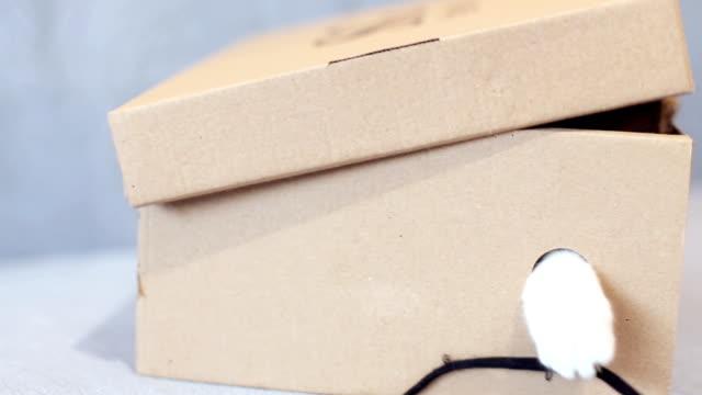 a young playful cat in a box - gatto dal pelo corto video stock e b–roll