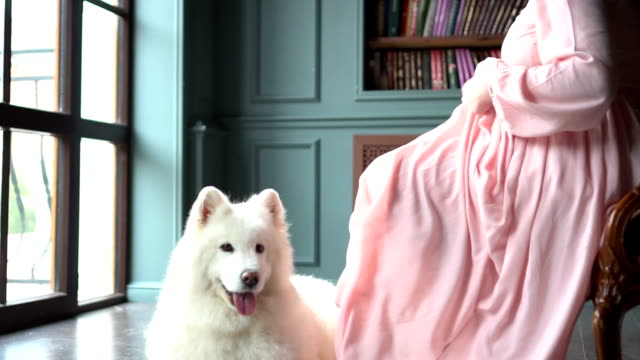Young pregnant woman in pink dress and her big white dog video