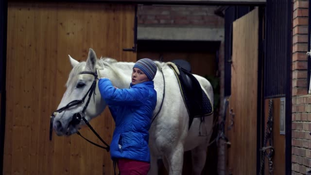 young pretty woman in a blue jacket and a sports hat puts on a bridle on a white horse. - briglia video stock e b–roll