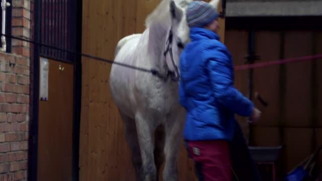 Young pretty woman in a blue jacket and sports hat prepares a saddle for a white horse. Young pretty woman in a blue jacket and sports hat prepares a saddle for a white horse. A woman rider prepares his horse for riding. saddle stock videos & royalty-free footage