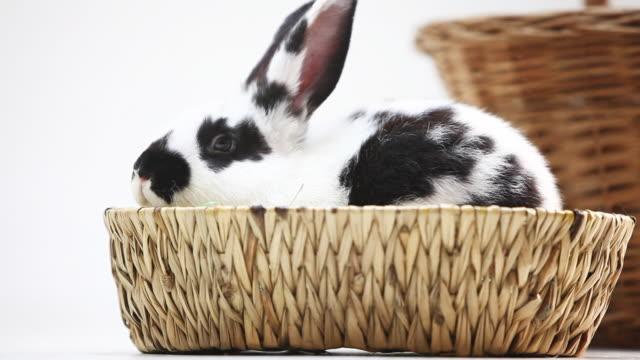młody królik w kosz na białym tle - 20 sekund lub dłużej filmów i materiałów b-roll