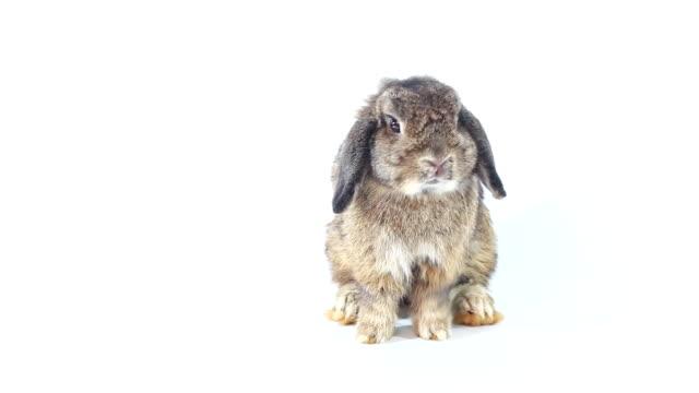 young rabbit - tavşan hayvan stok videoları ve detay görüntü çekimi
