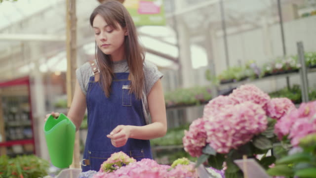 young saleswoman watering hydrangea flowers in shop video
