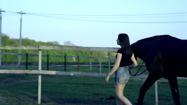 a young slim brunette woman in a black t-shirt and denim shorts leads a dark brown horse on a leash. - top nero video stock e b–roll