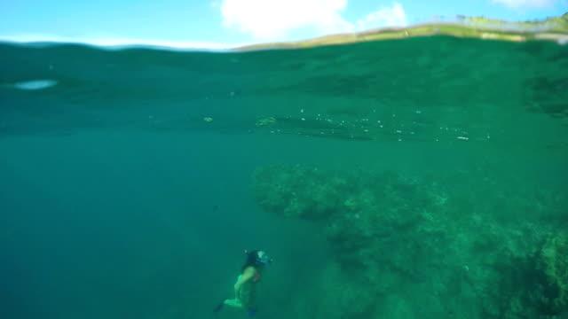 halva underwater: unga snorklare simma upp till ytan bredvid korallrev - bergsrygg bildbanksvideor och videomaterial från bakom kulisserna