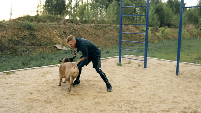Young sporty man training with his bullmastiff dog outdoors at park and preparing his pet for competition