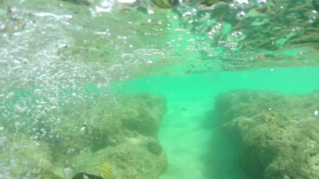 slowmotion: unga simmare att utforska spännande undervattens korallrev värld - bergsrygg bildbanksvideor och videomaterial från bakom kulisserna