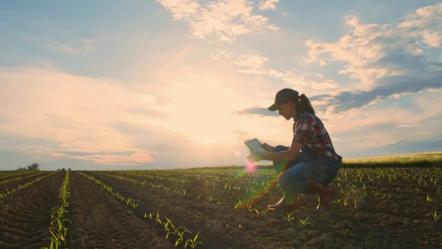 vídeos de stock e filmes b-roll de young teenage girl farmer with digital tablet checking saplings in sunny,rural field,slow motion - farmer