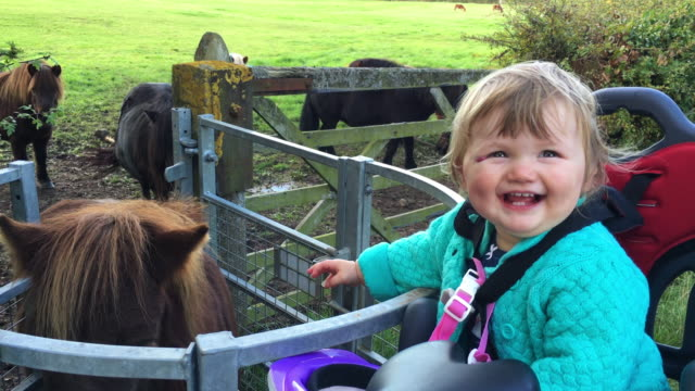 Young Toddler Girl On Dads Bike Visiting Shetland Ponies video