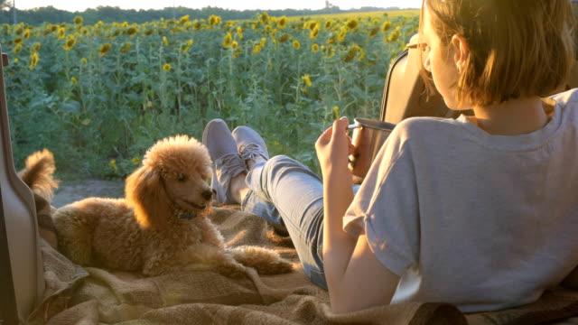 彼女の犬と若い旅行者の女性は、車オープン トランクに横たわっています。 - ヒマワリ点の映像素材/bロール