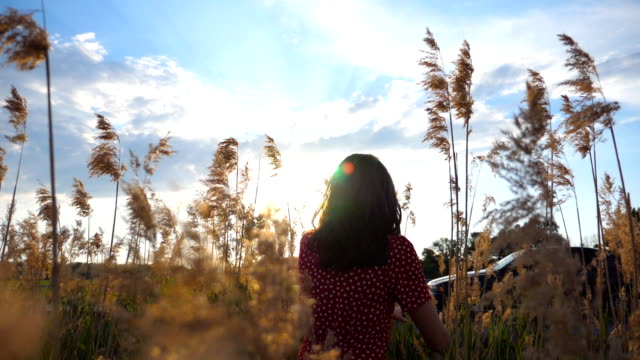 Young unrecognizable woman walking through field of high grass at sunset time. Girl enjoying nature with beautiful landscape at background. Rear view Slow motion Close up Young unrecognizable woman walking through field of high grass at sunset time. Girl enjoying nature with beautiful landscape at background. Rear view Slow motion Close up grass area stock videos & royalty-free footage