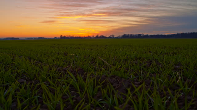 WS DS Young Wheat Under Dramatic Sky video