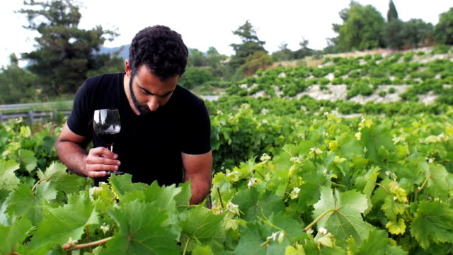 A young winemaker go through his winery, inspect the leaves and drink his red wine video