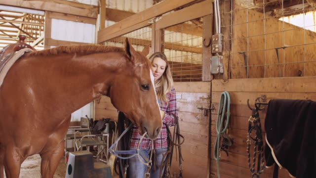 young woman adjusting halter for horse - sella video stock e b–roll