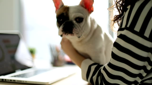 Young woman and her dog using laptop at home Young woman and her dog using laptop at home purebred dog stock videos & royalty-free footage