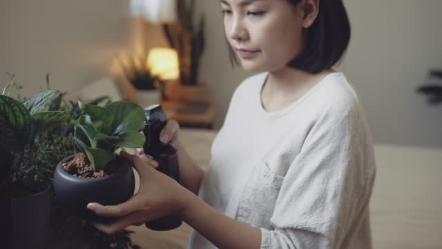 Young woman arranging the cactus pot plant