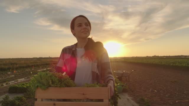 vídeos de stock e filmes b-roll de slo mo young woman carries a crate full of vegetables across a field at sunset - engradado