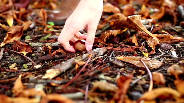vidéos et rushes de jeune femme collecte de conkers - marron couleur