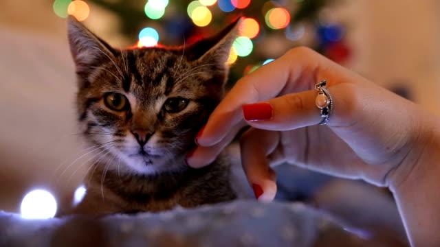 vídeos y material grabado en eventos de stock de un gato de abrazo joven - gato doméstico