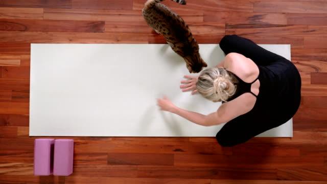 giovane donna che fa yoga con il gatto - metodo pilates video stock e b–roll