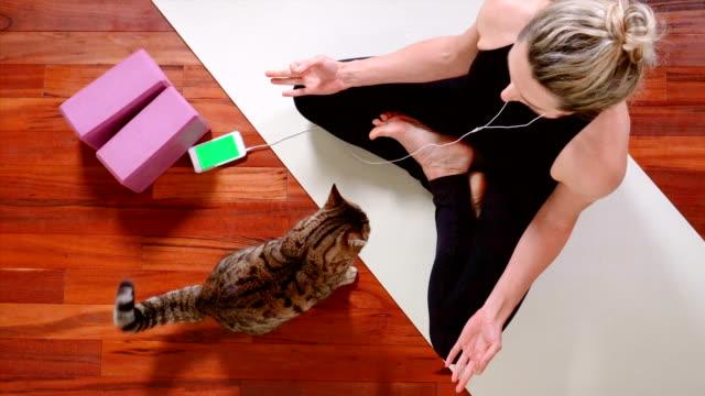 ung kvinna som gör yoga med smart telefon - katt inomhus bildbanksvideor och videomaterial från bakom kulisserna