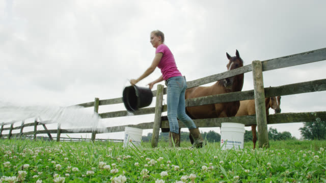 vídeos de stock e filmes b-roll de a young woman dumps dirty water out of a horse's water bucket and hangs it back on the fence of a horse corral on a farm on a partly cloudy day - agricultora