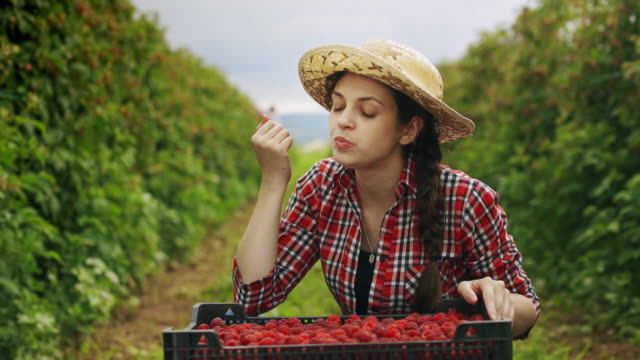 Young woman eats fresh, red raspberries on the garden at sunset. Harvesting