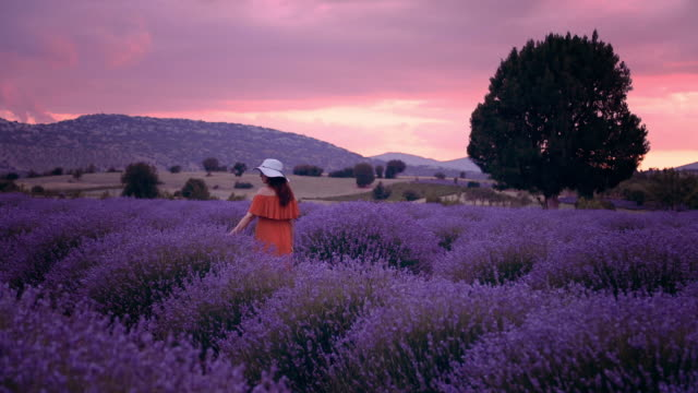 Young woman enjoying lavender field at sunset Rear view of young beautiful woman with yellow dress and blue hat having fun walking  in the Lavender farm in Aegean Region, Turkey with setting sun giving sunburst from behind a mountain provence alpes cote d'azur stock videos & royalty-free footage