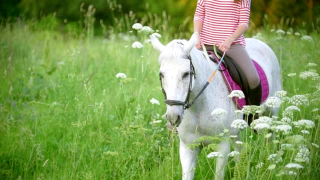 young woman galloping on horse through the meadow at summer evening - mustang video stock e b–roll