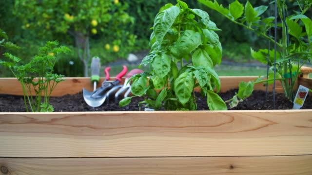 vídeos y material grabado en eventos de stock de young woman gardening en raised planter box - backyard