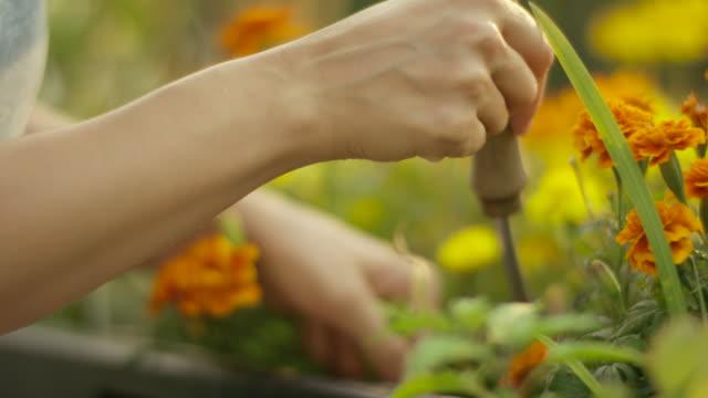vídeos y material grabado en eventos de stock de mujer joven de jardinería en su jardín - jardinería