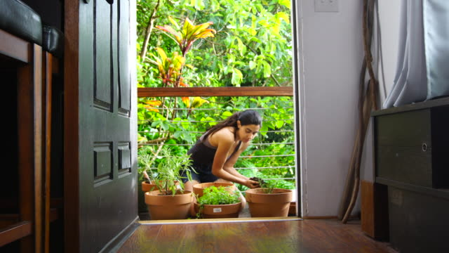 Young woman gardens on the deck. A pretty young native woman uses her hands to scoop rich brown potting soil into red clay pots, gently transplanting her herbs and succulent plants while kneeling on a rustic wooden deck, framed by a doorway. A tropical rain falls on the lush jungle in the background. The model is surrounded by flower pots, potting soil, and gardening equipment. Steadycam and static shots are available. tank top stock videos & royalty-free footage