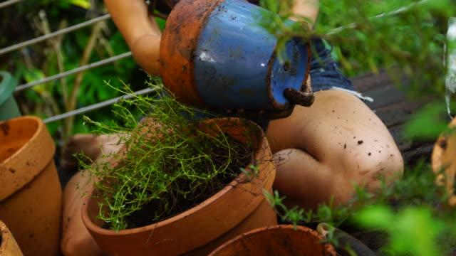 vídeos y material grabado en eventos de stock de jardines de mujer joven en la cubierta. - tiesto
