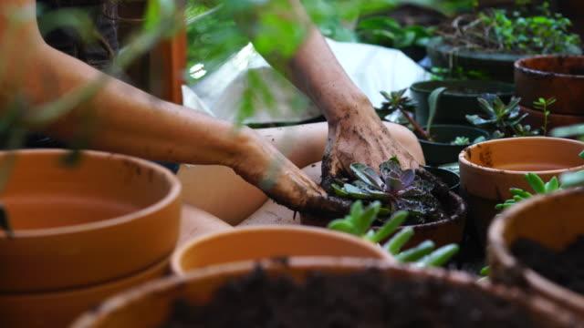 Junge Frau Gärten auf dem Deck. – Video