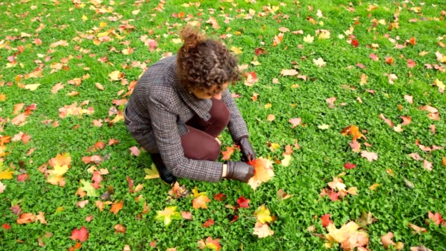 Young woman gathering autumn leaves from ground in park video