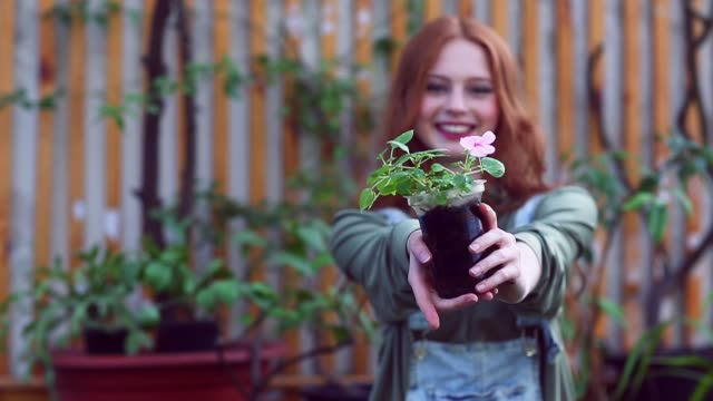 Young woman giving flowerpot with flower to camera