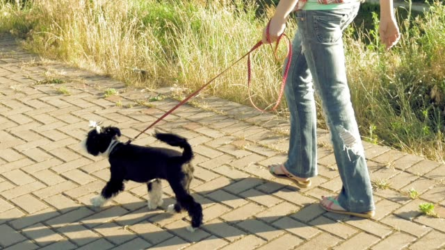 Young woman going along path with little funny dog Young woman going along the path with little funny dog on a leash in the park on city background. Enjoying of active healthy walk with pet at summer sunny day. leash stock videos & royalty-free footage